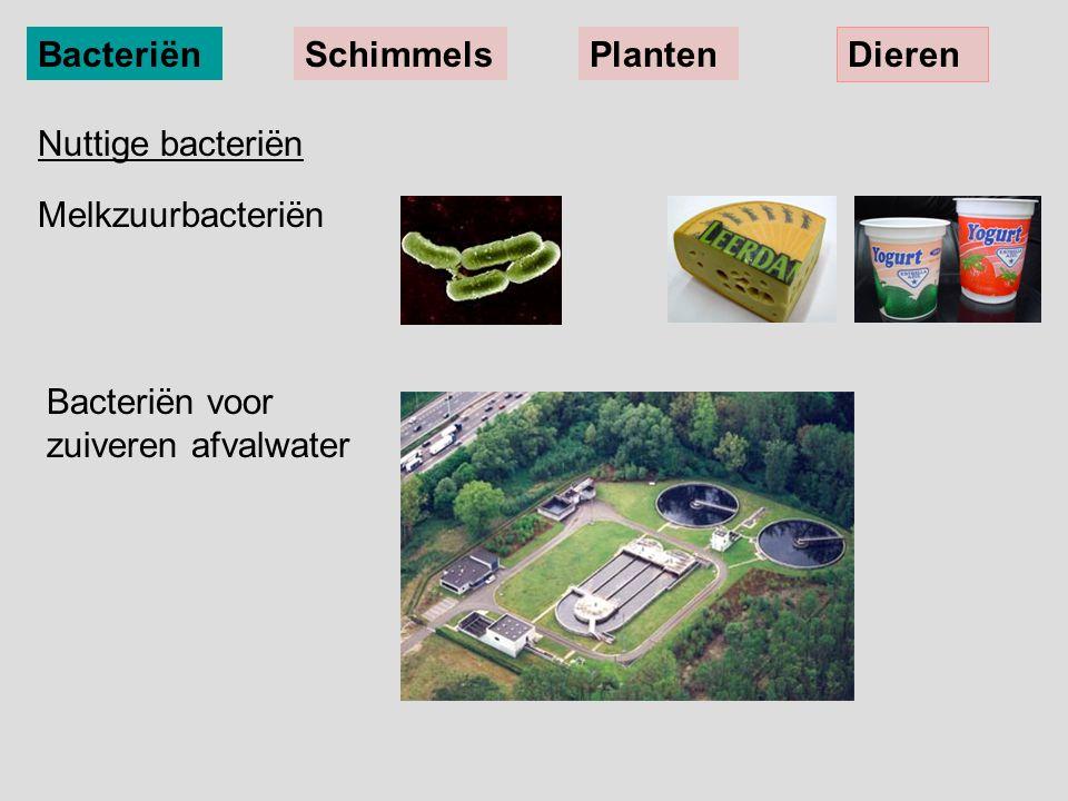 Bacteriën Schimmels. Planten. Dieren. Nuttige bacteriën.