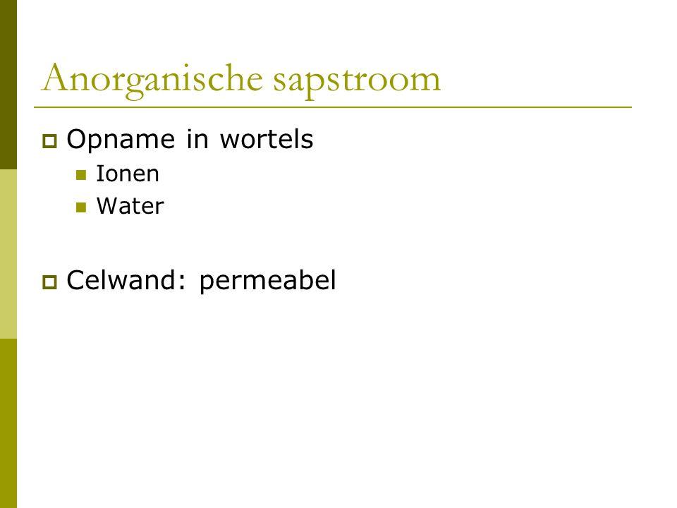 Anorganische sapstroom
