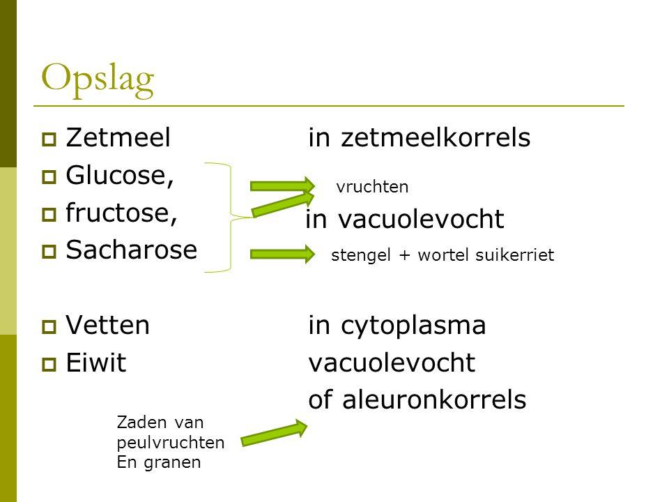 Opslag Zetmeel in zetmeelkorrels Glucose, fructose, Sacharose
