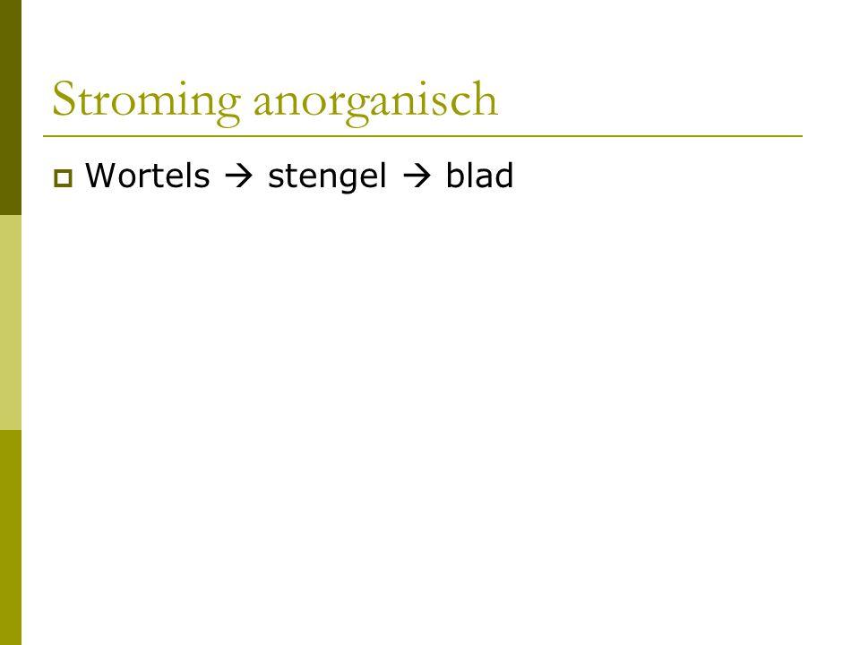 Stroming anorganisch Wortels  stengel  blad