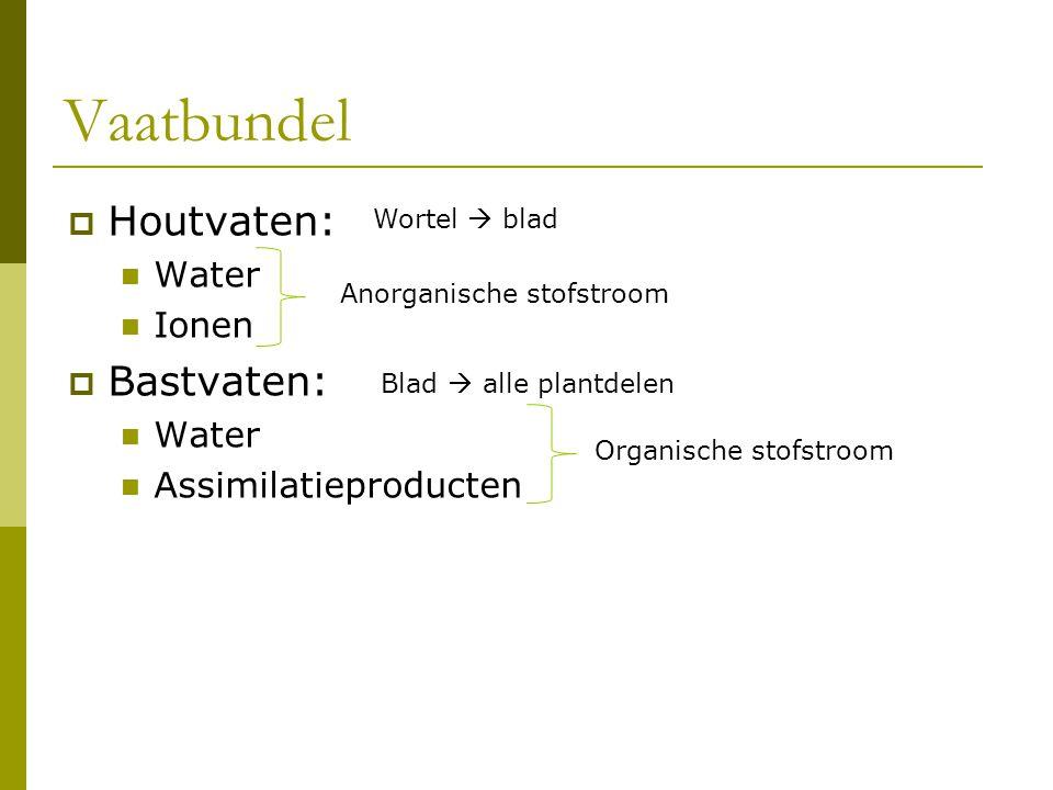 Vaatbundel Houtvaten: Bastvaten: Water Ionen Assimilatieproducten