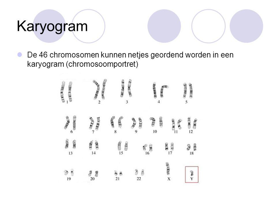 Karyogram De 46 chromosomen kunnen netjes geordend worden in een karyogram (chromosoomportret)
