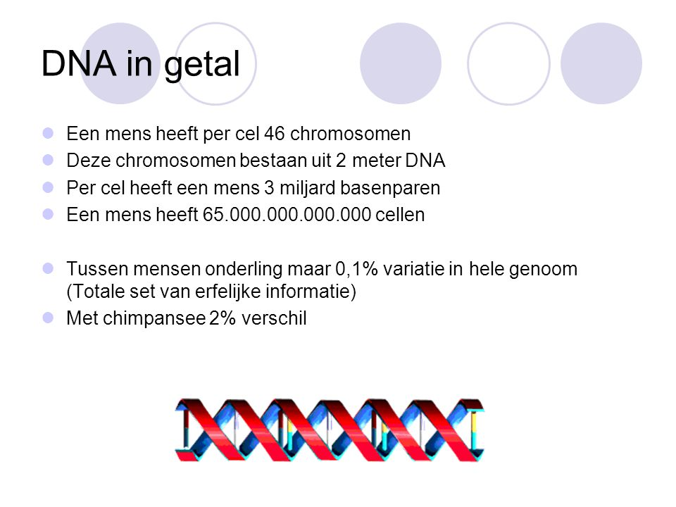 DNA in getal Een mens heeft per cel 46 chromosomen