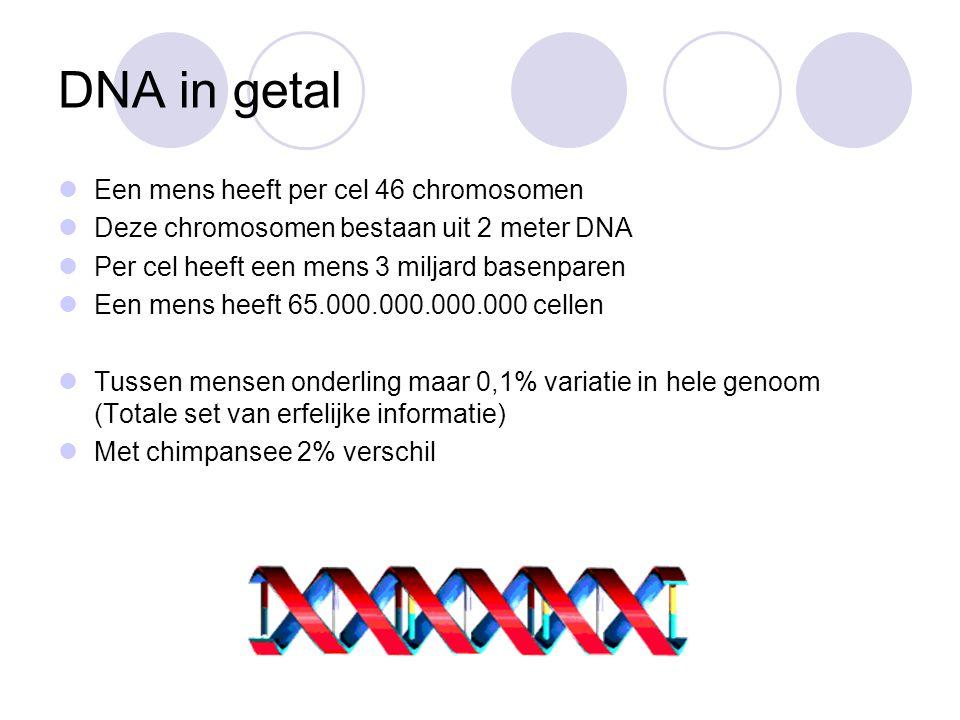 DNA in getal Een mens heeft per cel 46 chromosomen