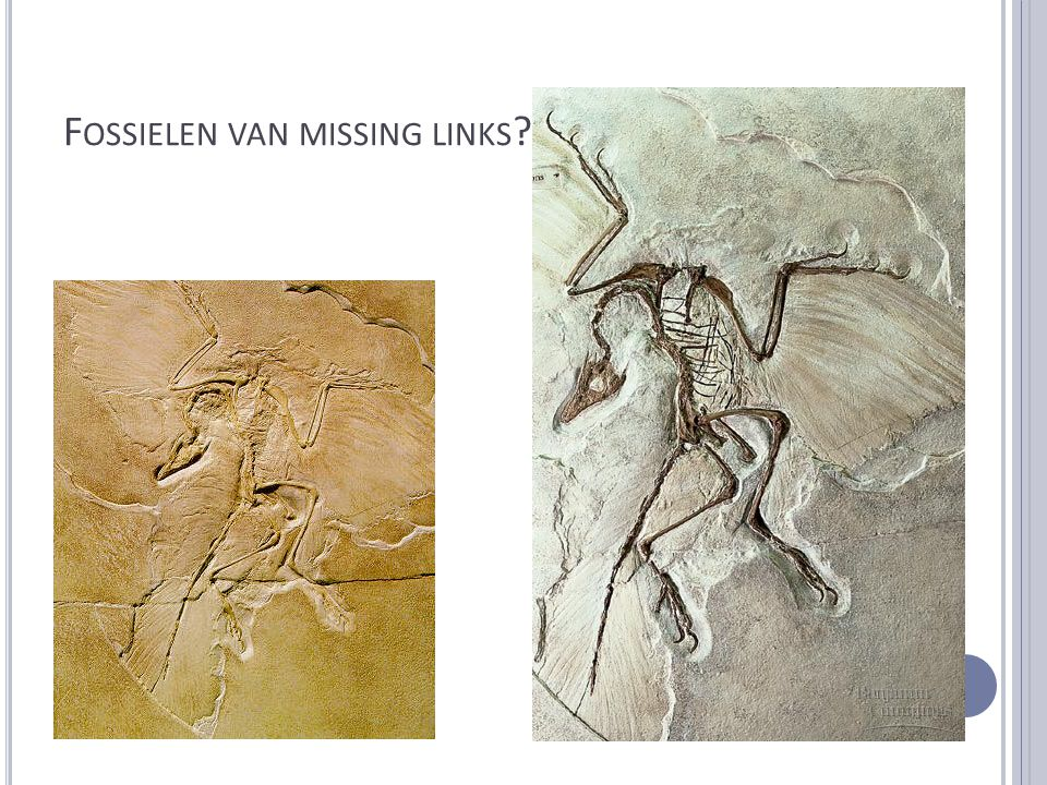 Fossielen van missing links !