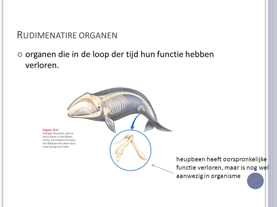 Rudimenatire organen organen die in de loop der tijd hun functie hebben verloren.