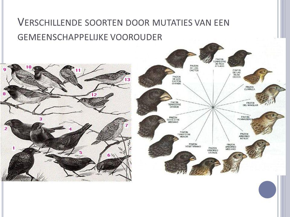 Verschillende soorten door mutaties van een gemeenschappelijke voorouder