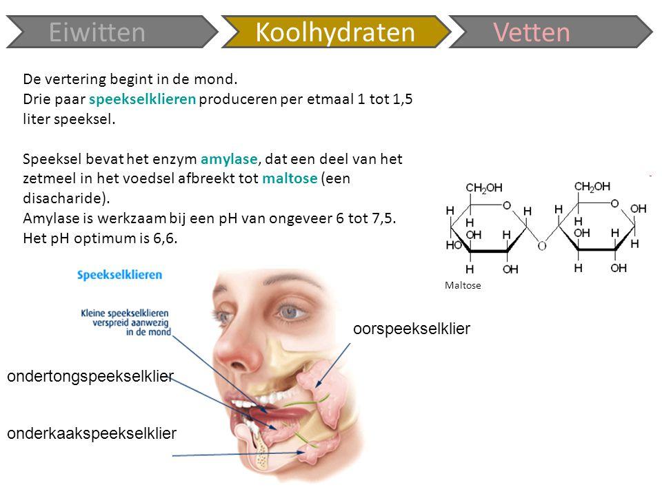 Eiwitten Koolhydraten Vetten De vertering begint in de mond.