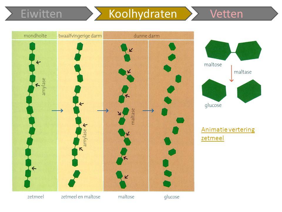 Eiwitten Koolhydraten Vetten Animatie vertering zetmeel