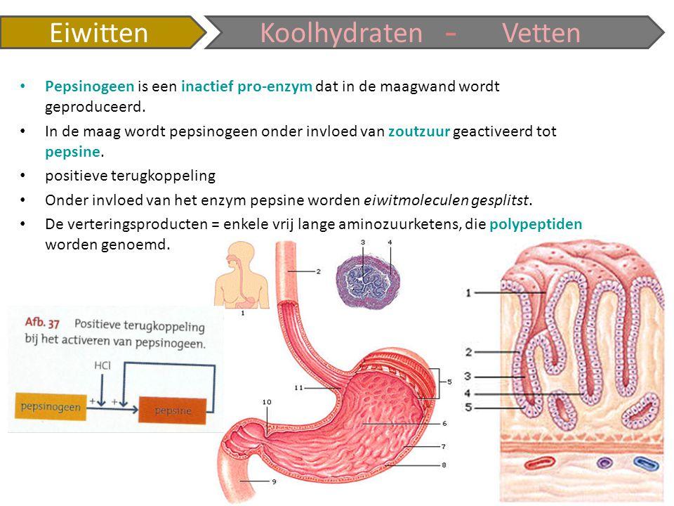 - Eiwitten Koolhydraten Vetten