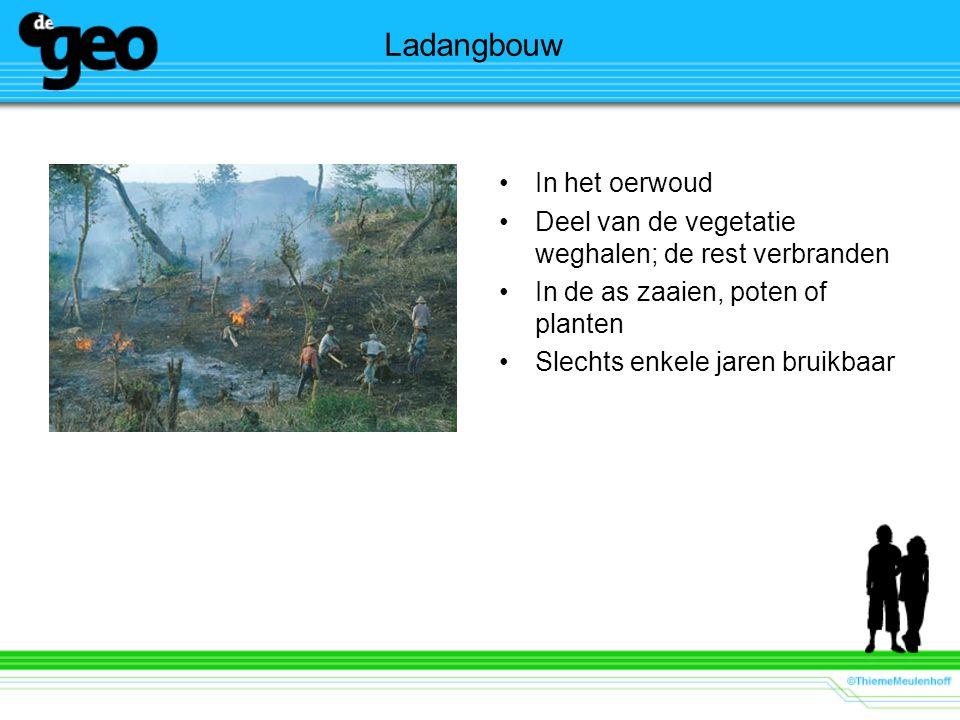 Ladangbouw In het oerwoud