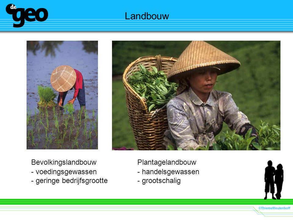Bevolkingslandbouw Plantagelandbouw