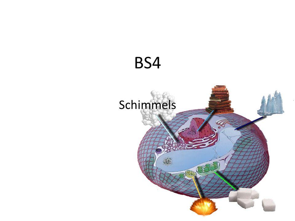 BS4 Schimmels