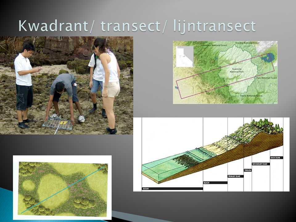 Kwadrant/ transect/ lijntransect