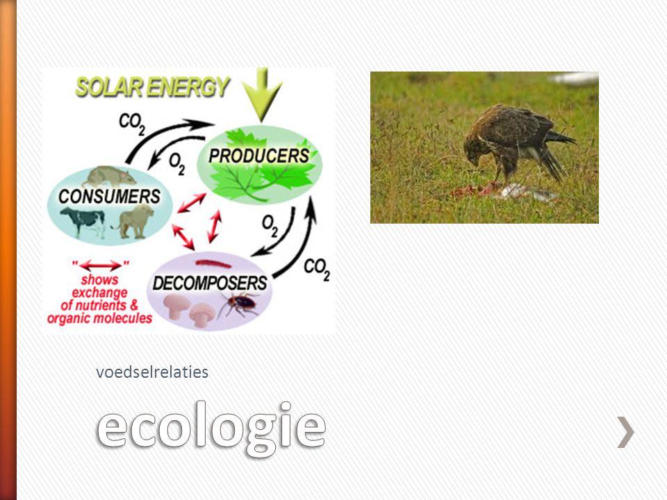 voedselrelaties ecologie