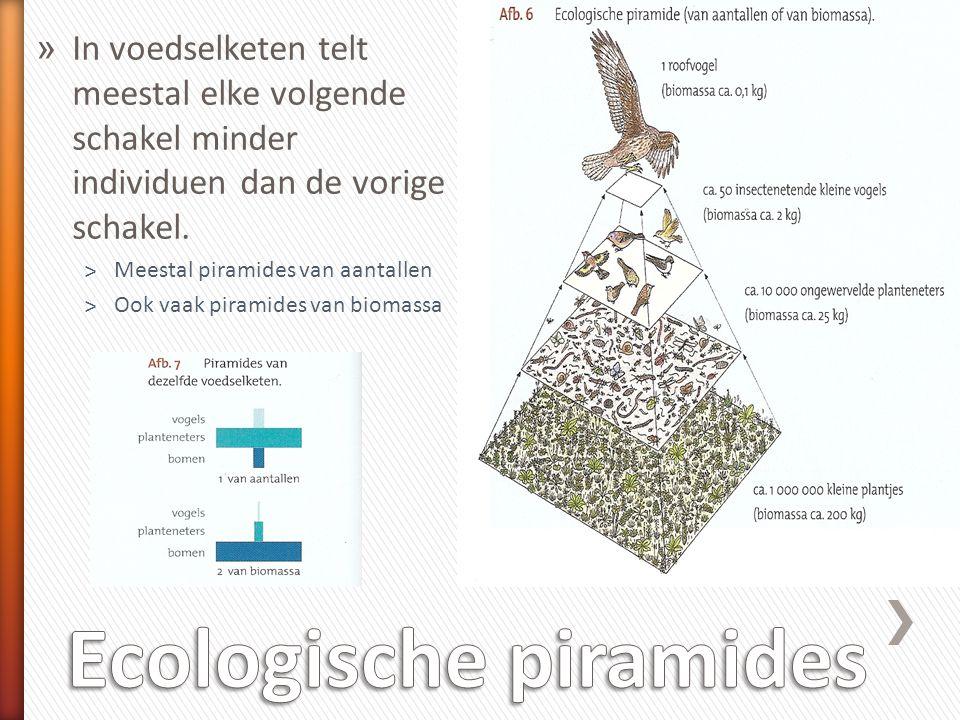 Ecologische piramides