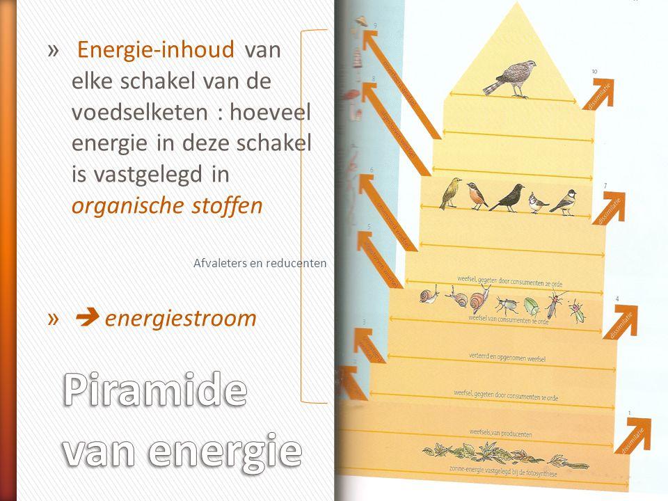 Energie-inhoud van elke schakel van de voedselketen : hoeveel energie in deze schakel is vastgelegd in organische stoffen