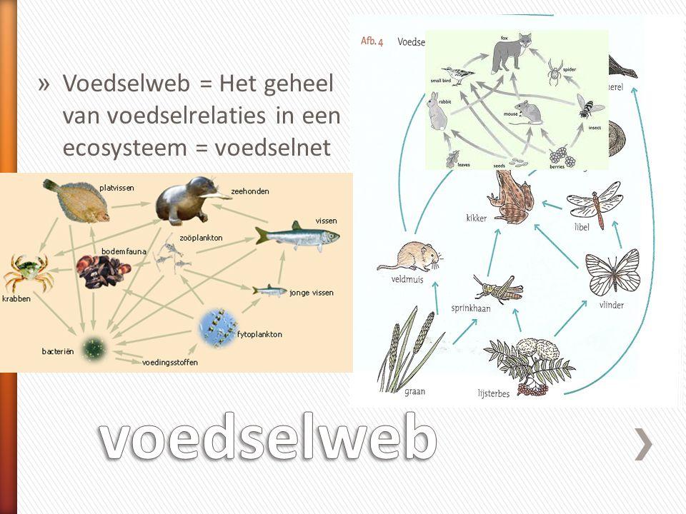 Voedselweb = Het geheel van voedselrelaties in een ecosysteem = voedselnet