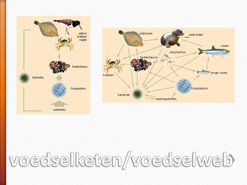 voedselketen/voedselweb