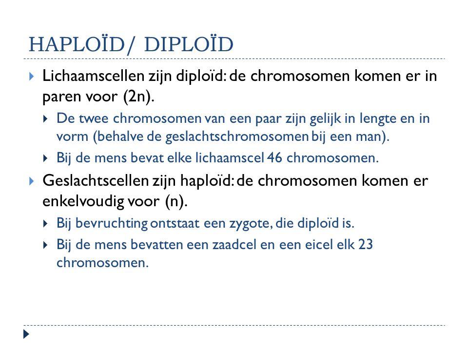 HAPLOÏD/ DIPLOÏD Lichaamscellen zijn diploïd: de chromosomen komen er in paren voor (2n).