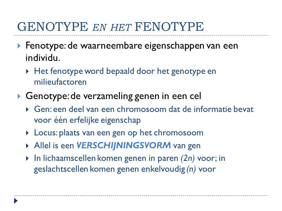 genotype en het fenotype
