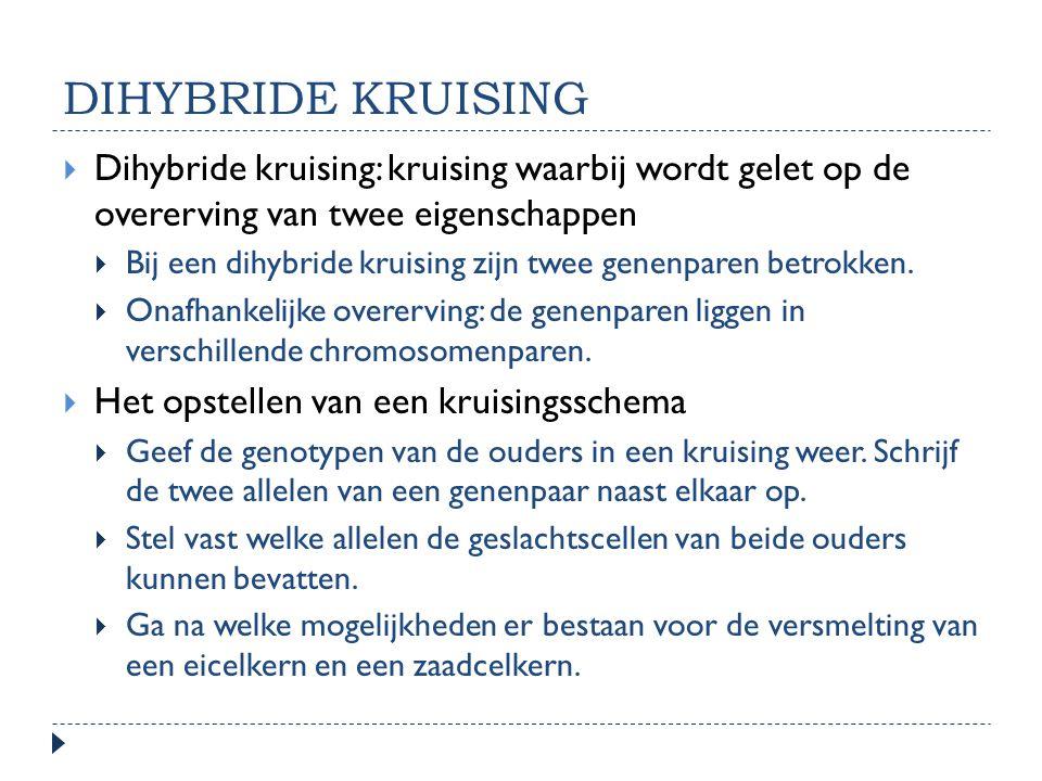 dihybride kruising Dihybride kruising: kruising waarbij wordt gelet op de overerving van twee eigenschappen.