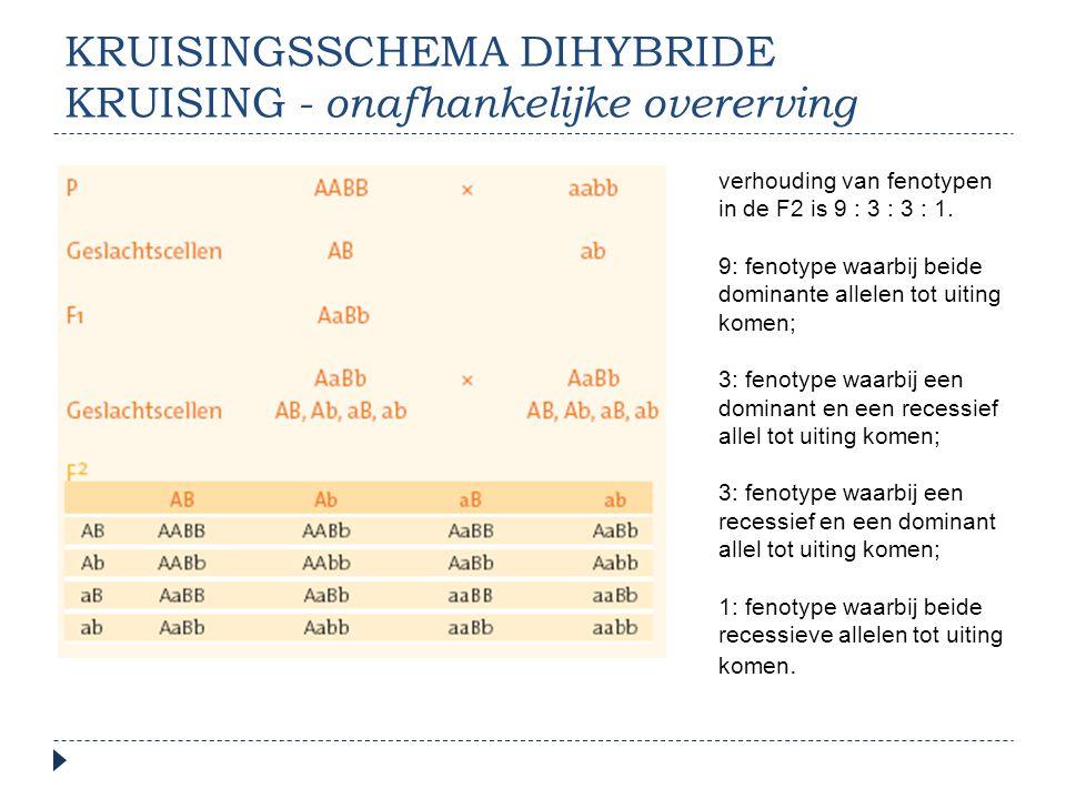 Kruisingsschema dihybride kruising - onafhankelijke overerving