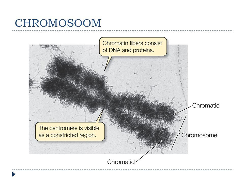 CHROMOSOOM