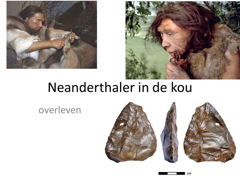 Neanderthaler in de kou