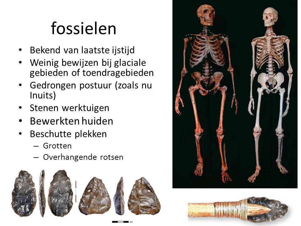 fossielen Bewerkten huiden Bekend van laatste ijstijd
