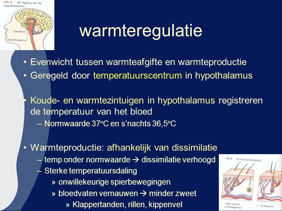 warmteregulatie Evenwicht tussen warmteafgifte en warmteproductie