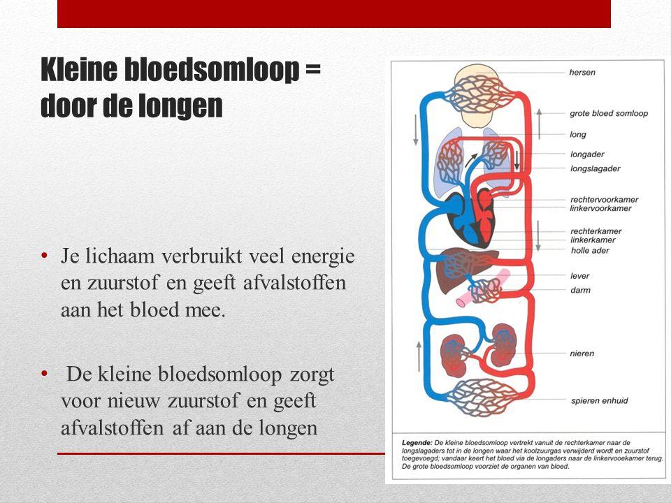 Kleine bloedsomloop = door de longen