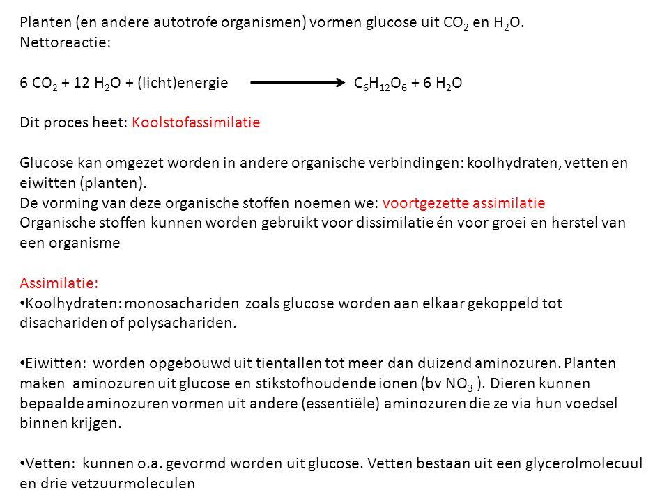 Planten (en andere autotrofe organismen) vormen glucose uit CO2 en H2O.
