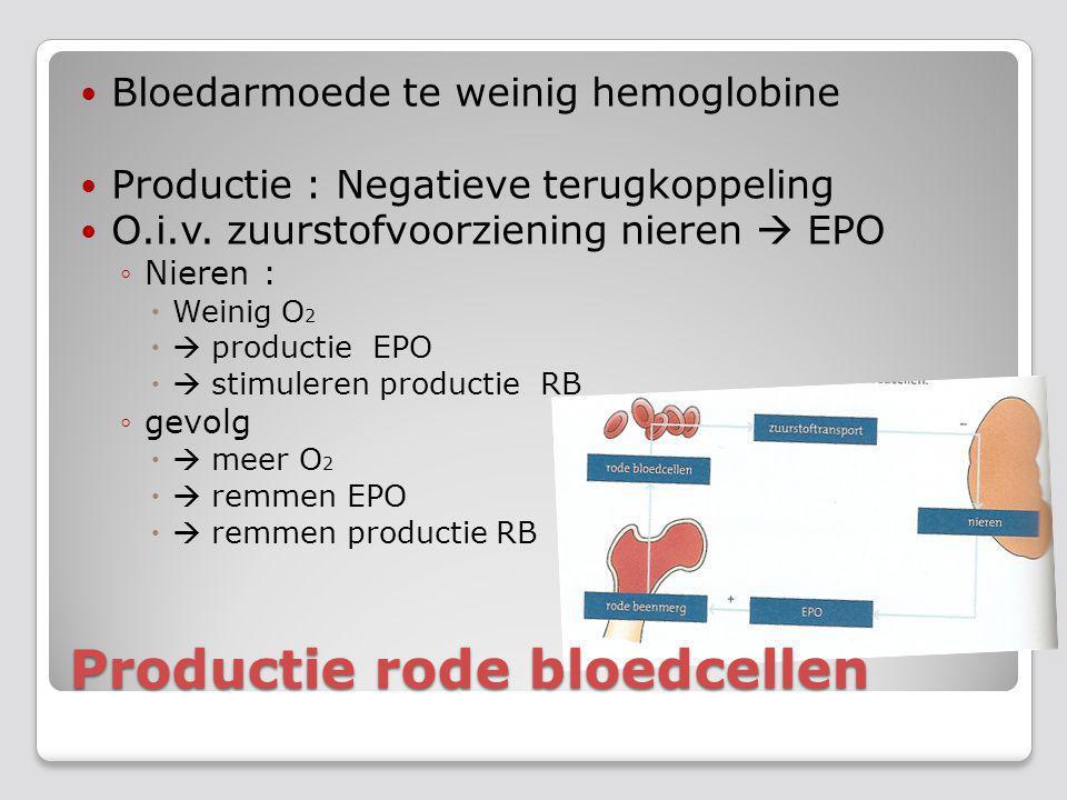 Productie rode bloedcellen
