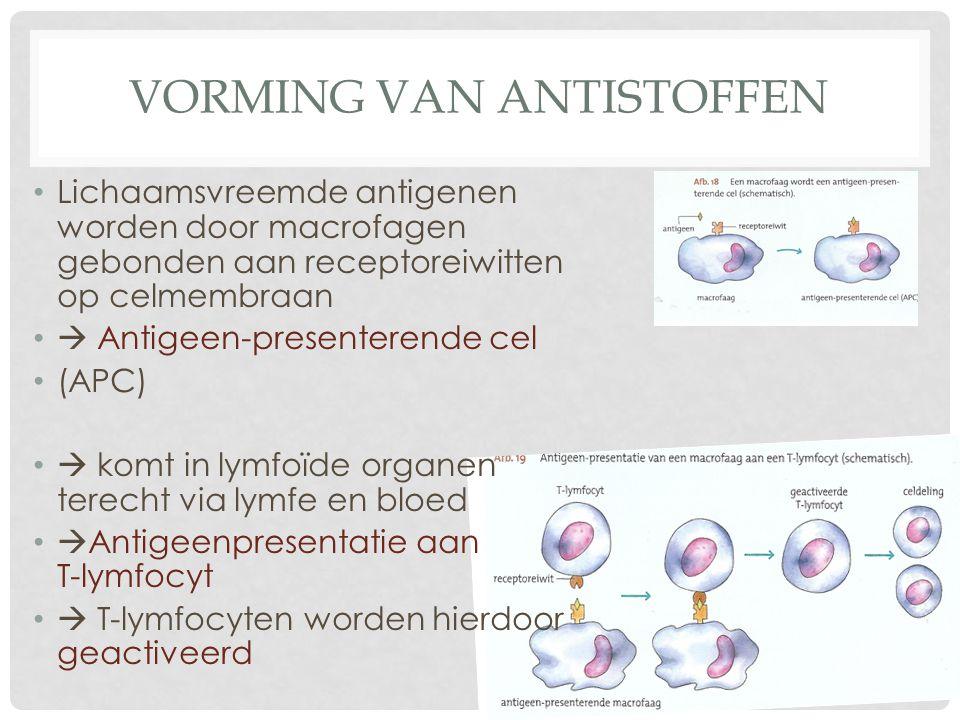 Vorming van antistoffen