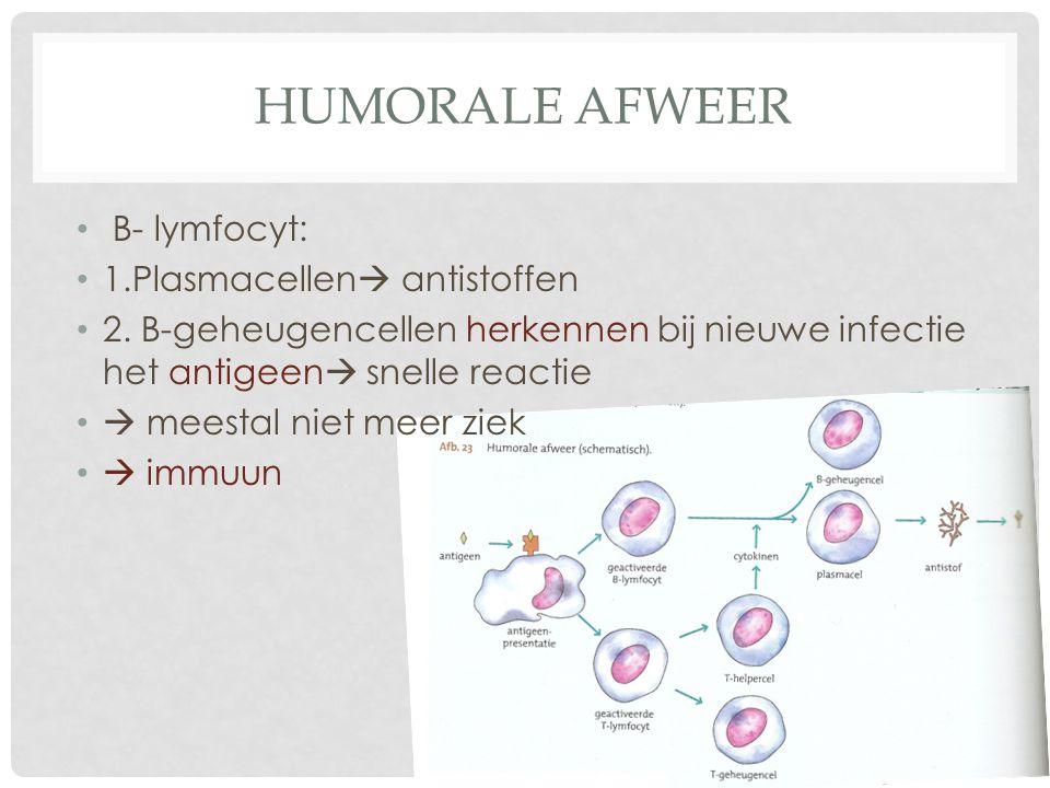 Humorale afweer B- lymfocyt: 1.Plasmacellen antistoffen