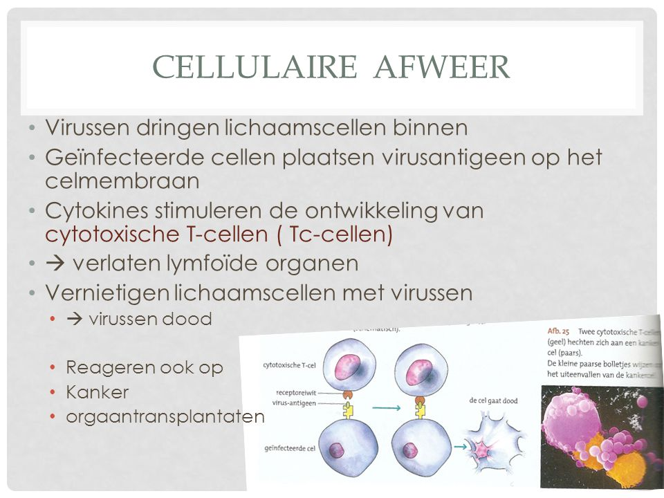Cellulaire afweer Virussen dringen lichaamscellen binnen