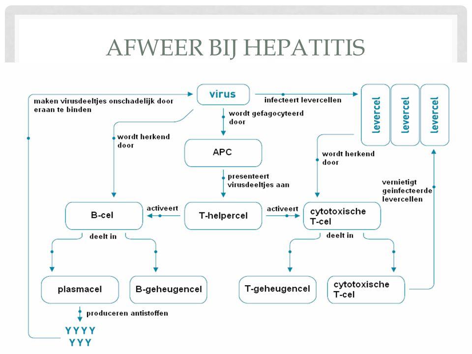 Afweer bij hepatitis
