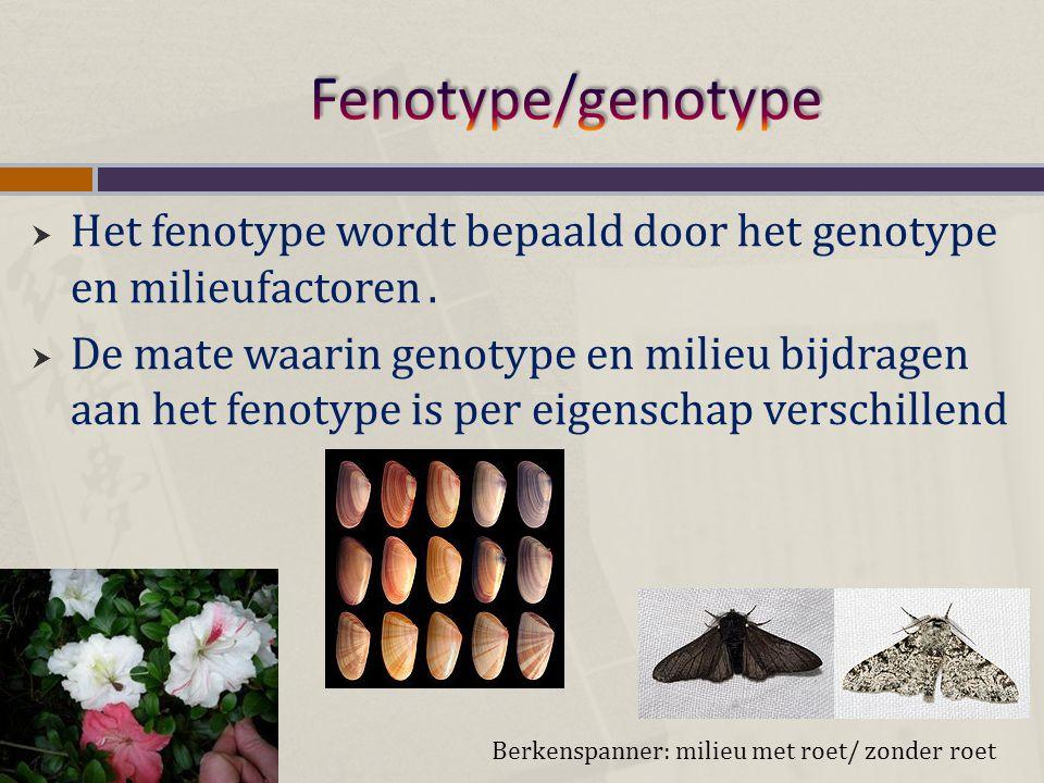 Fenotype/genotype Het fenotype wordt bepaald door het genotype en milieufactoren .
