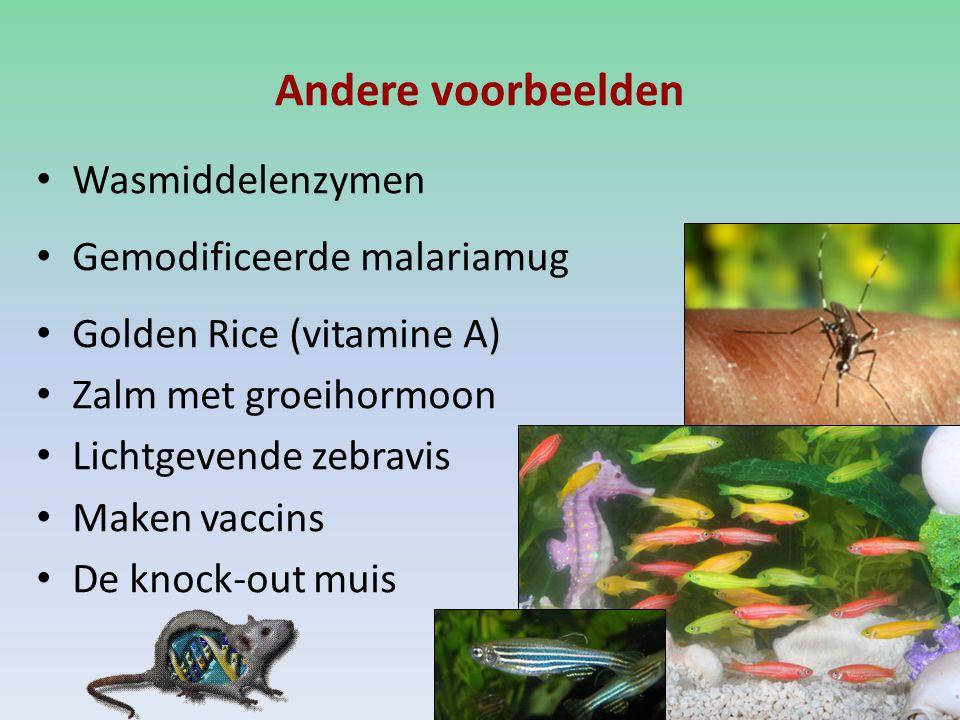 Andere voorbeelden Wasmiddelenzymen Gemodificeerde malariamug