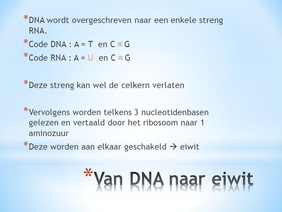 DNA wordt overgeschreven naar een enkele streng RNA.
