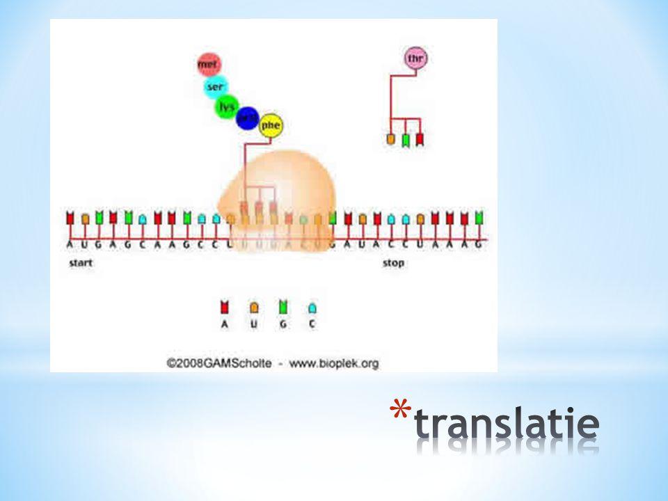 translatie