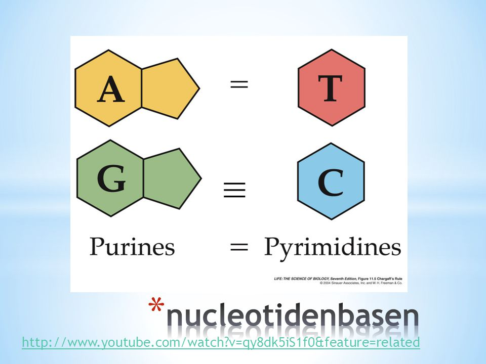 ≡ ≡ nucleotidenbasen http://www.youtube.com/watch v=qy8dk5iS1f0&feature=related
