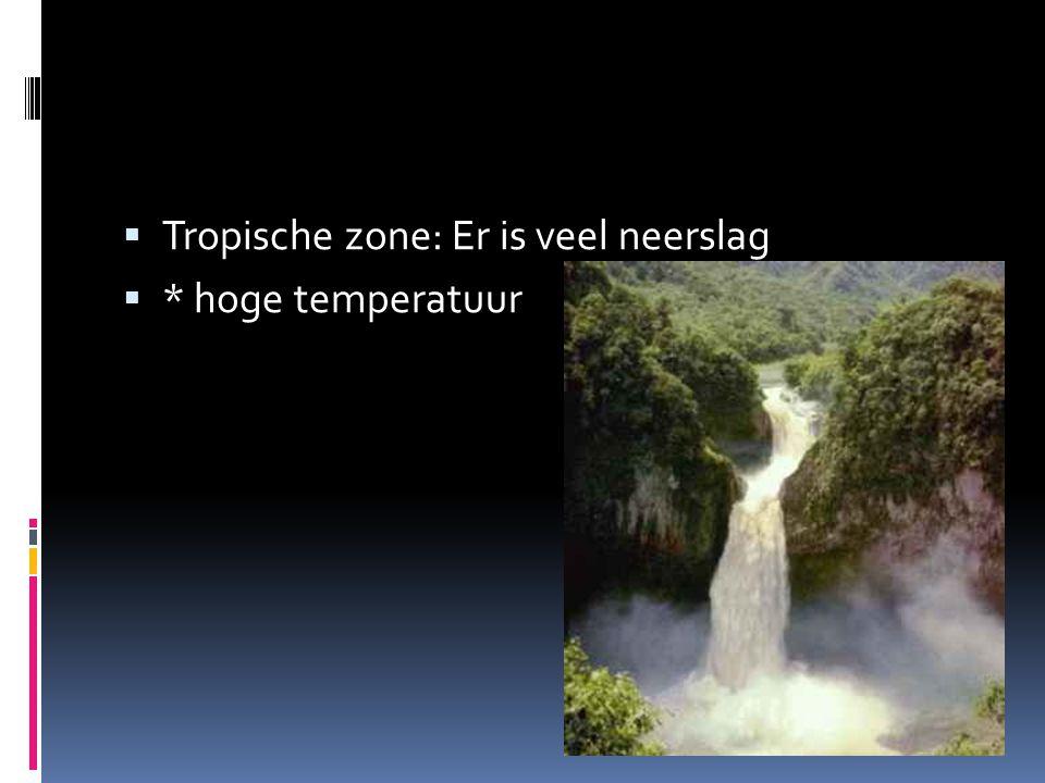Tropische zone: Er is veel neerslag