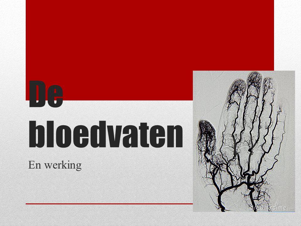 De bloedvaten En werking