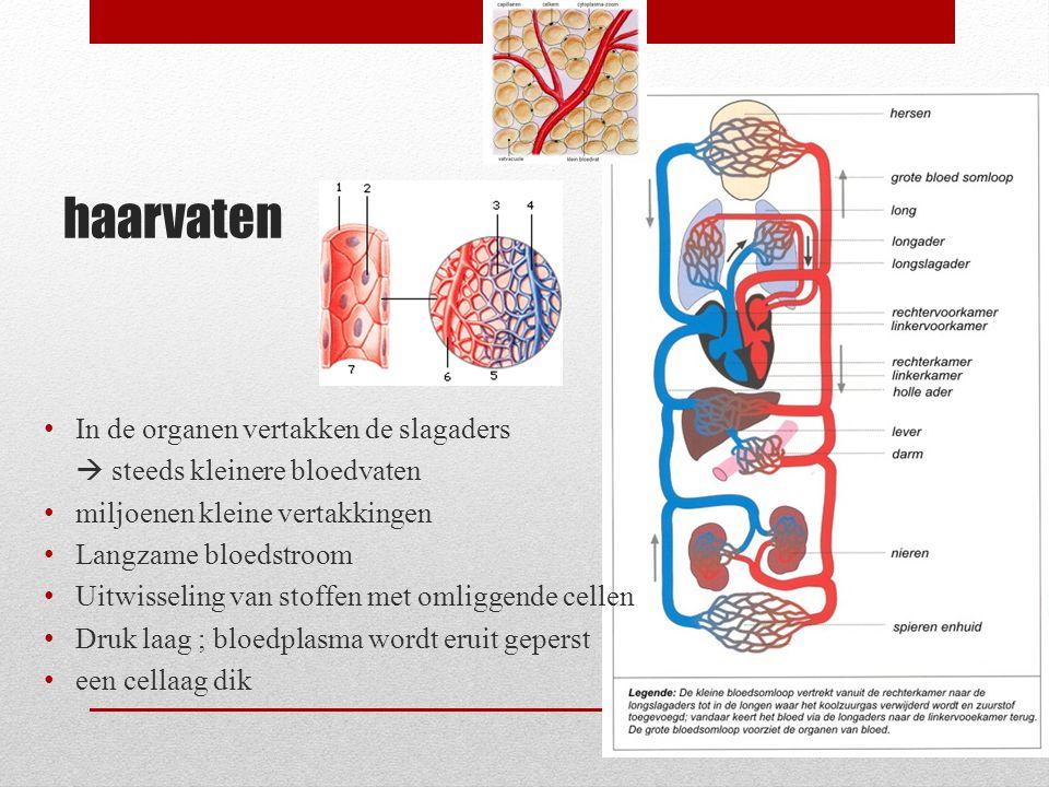 haarvaten In de organen vertakken de slagaders
