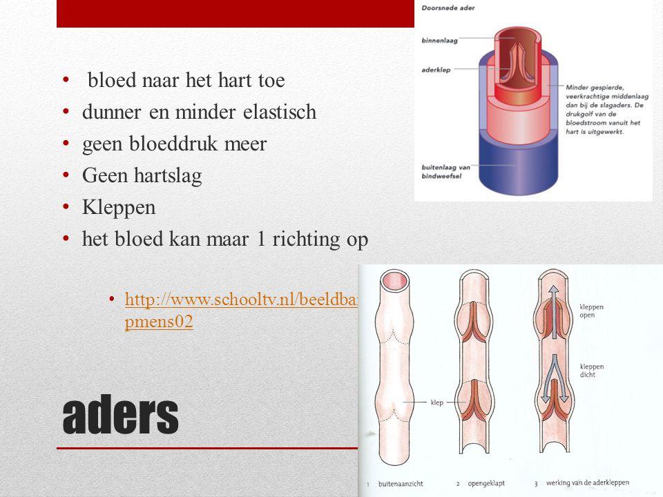 aders bloed naar het hart toe dunner en minder elastisch