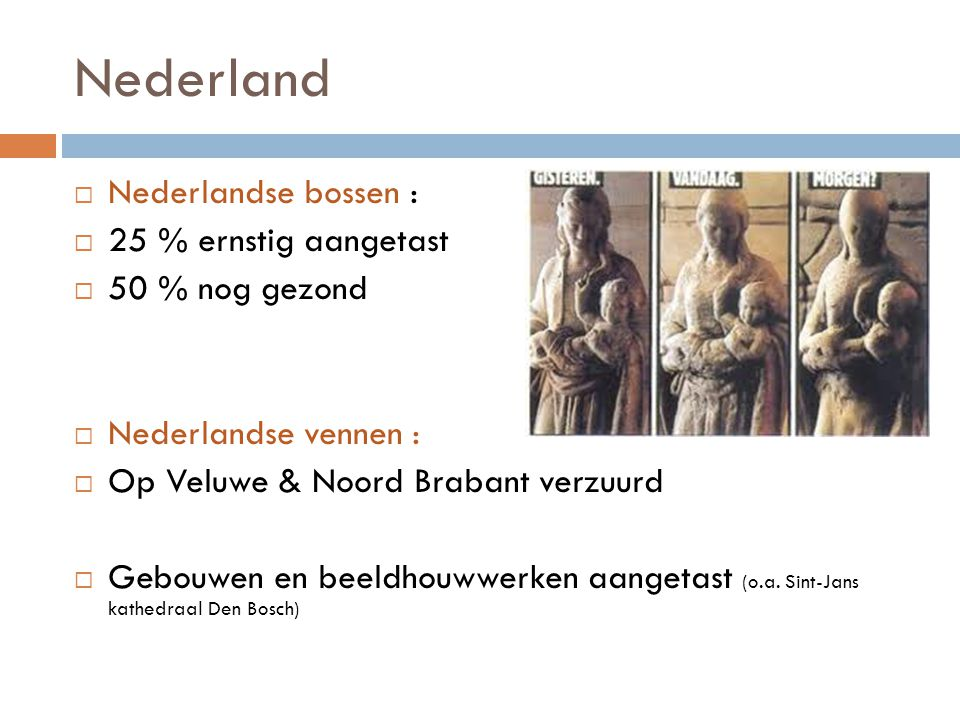 Nederland Nederlandse bossen : 25 % ernstig aangetast 50 % nog gezond