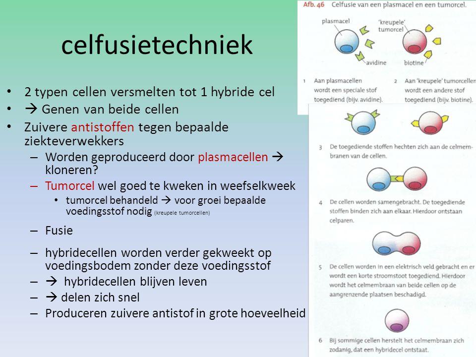 celfusietechniek 2 typen cellen versmelten tot 1 hybride cel