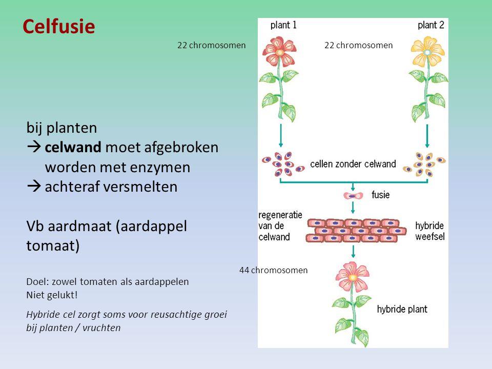 Celfusie bij planten celwand moet afgebroken worden met enzymen